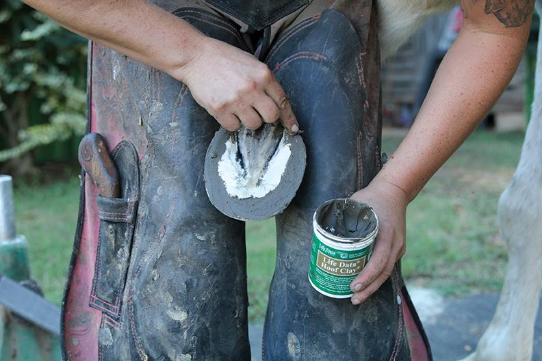 hoof clay applied to thrush