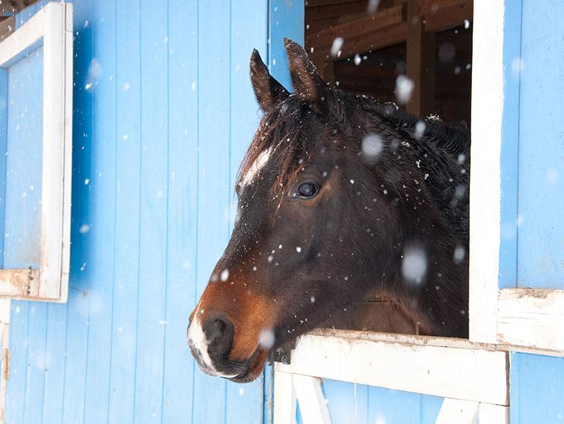 Horse in Barn with Snow